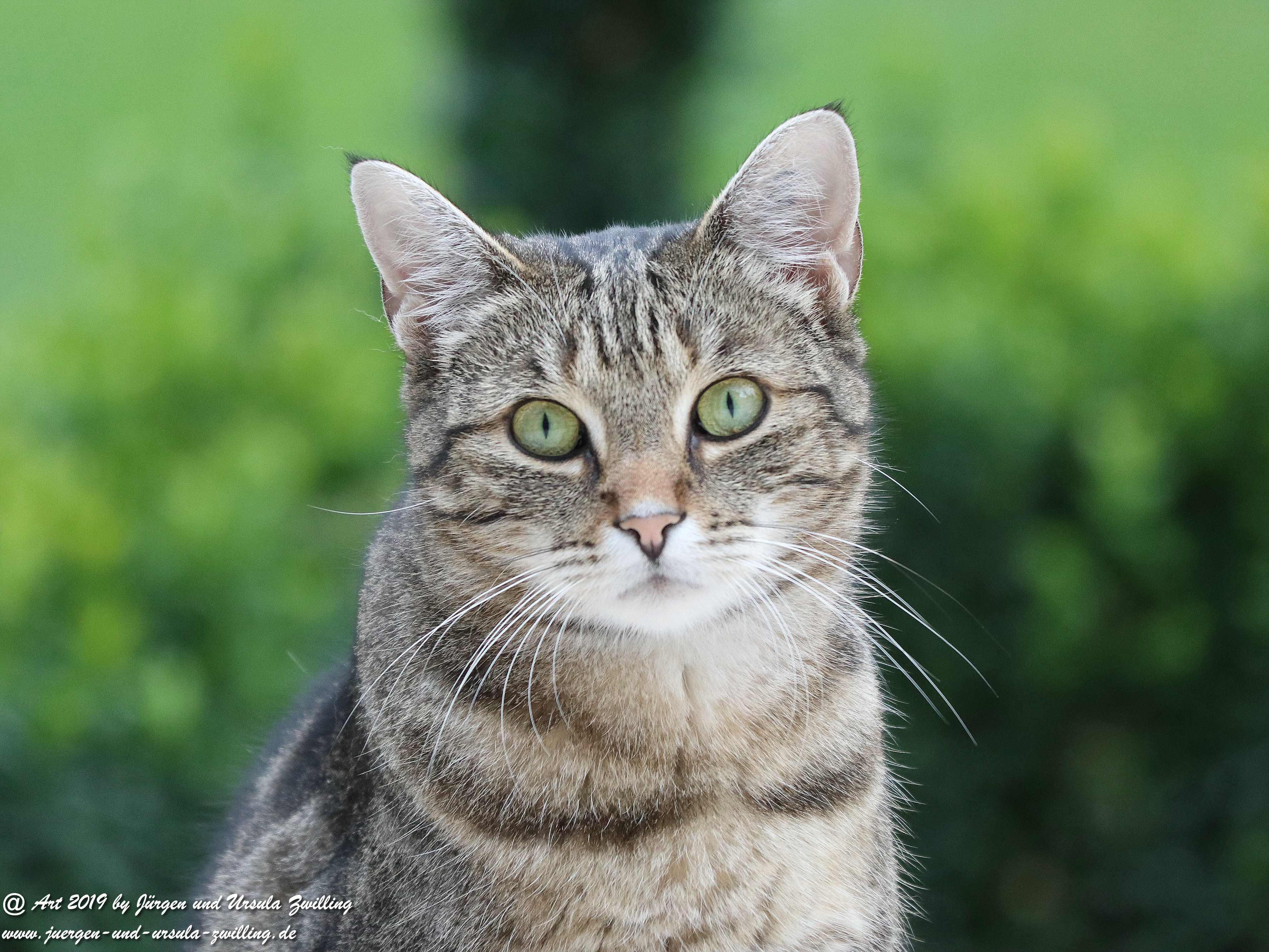 Katze Mimi 9