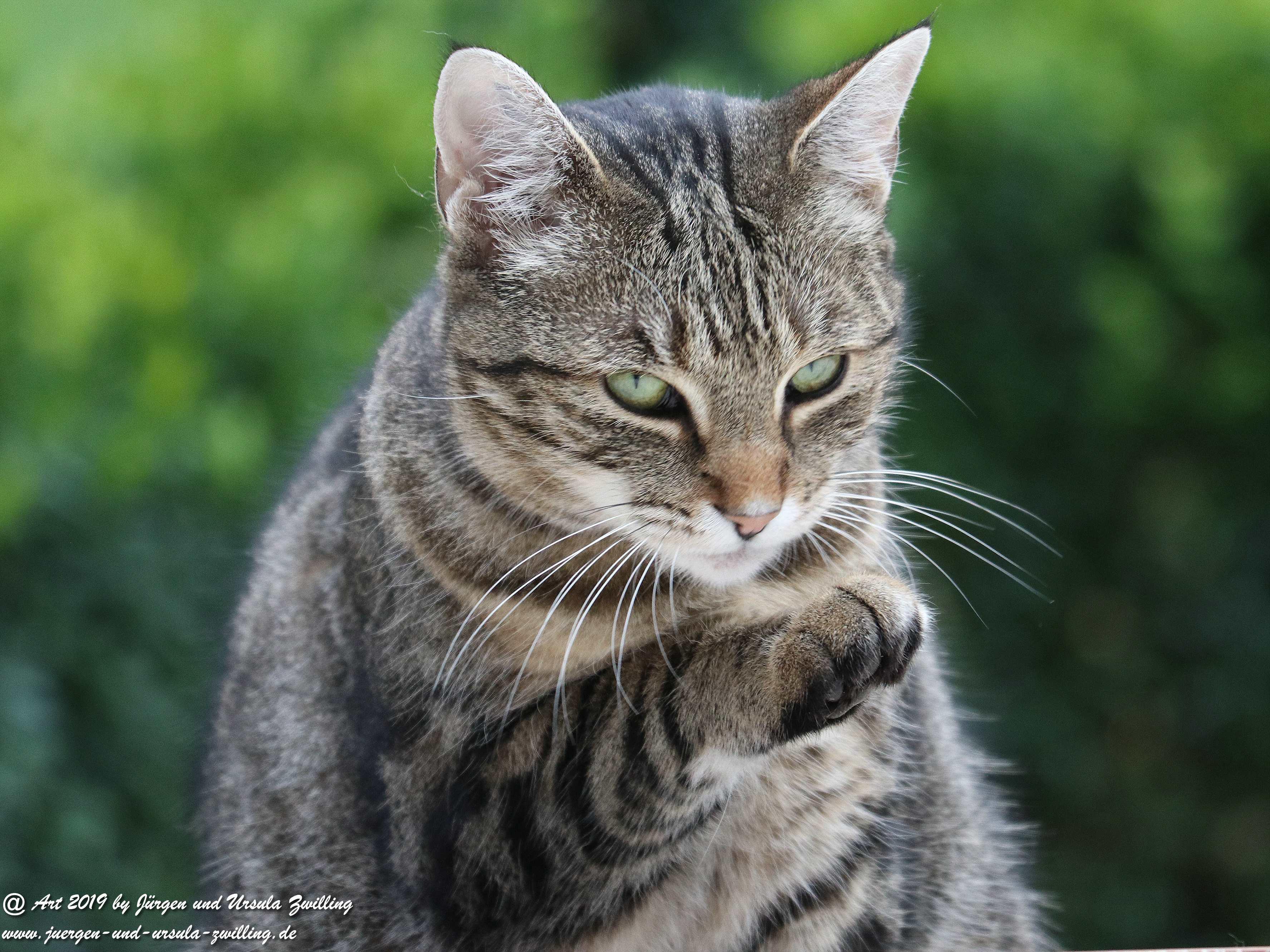 Katze Mimi 10