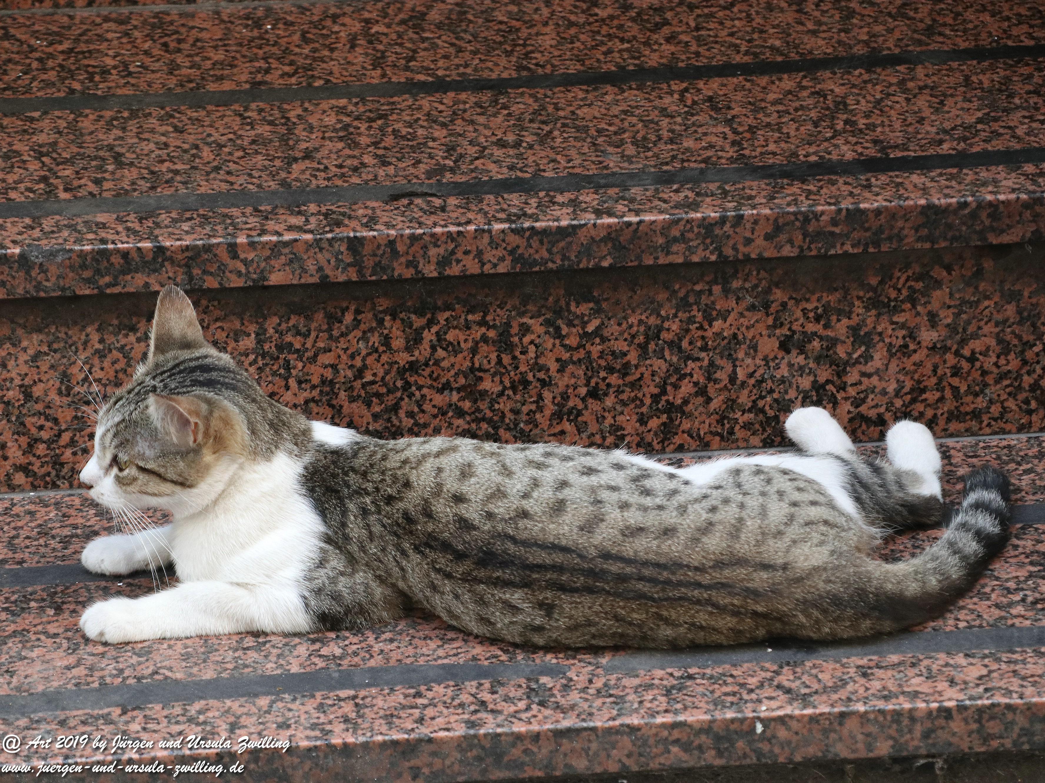Taranto Katze