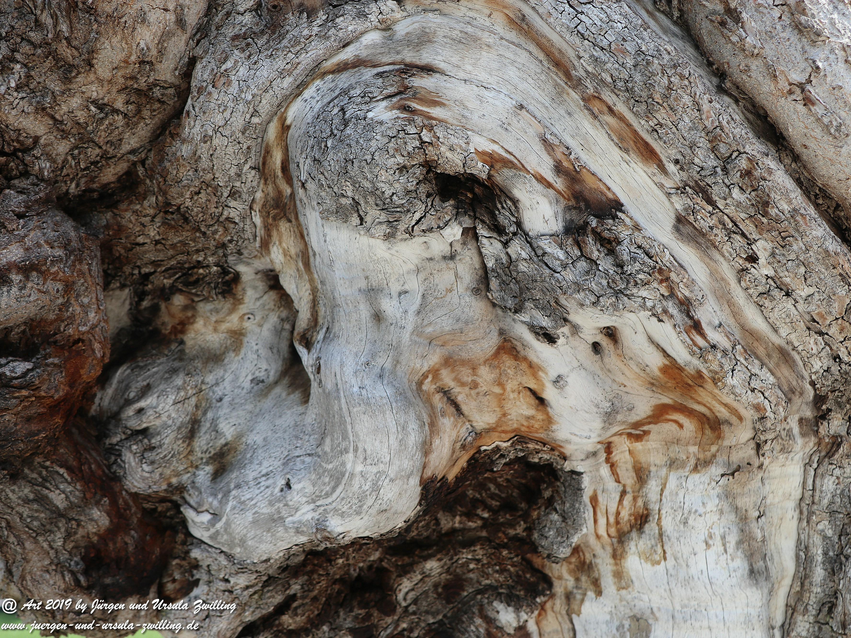Olivenbaum - Kunst 2