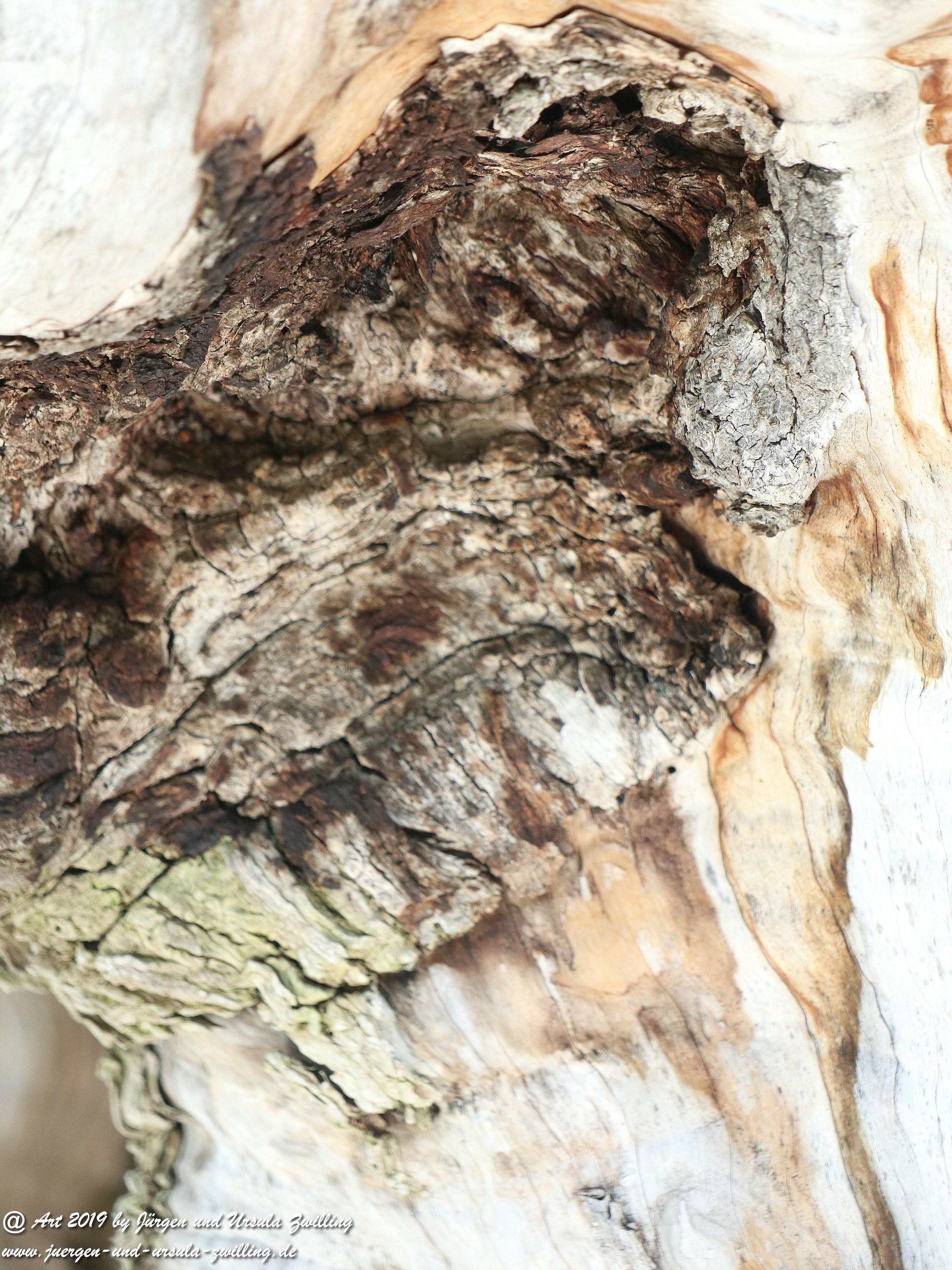 Olivenbaum - Kunst 3