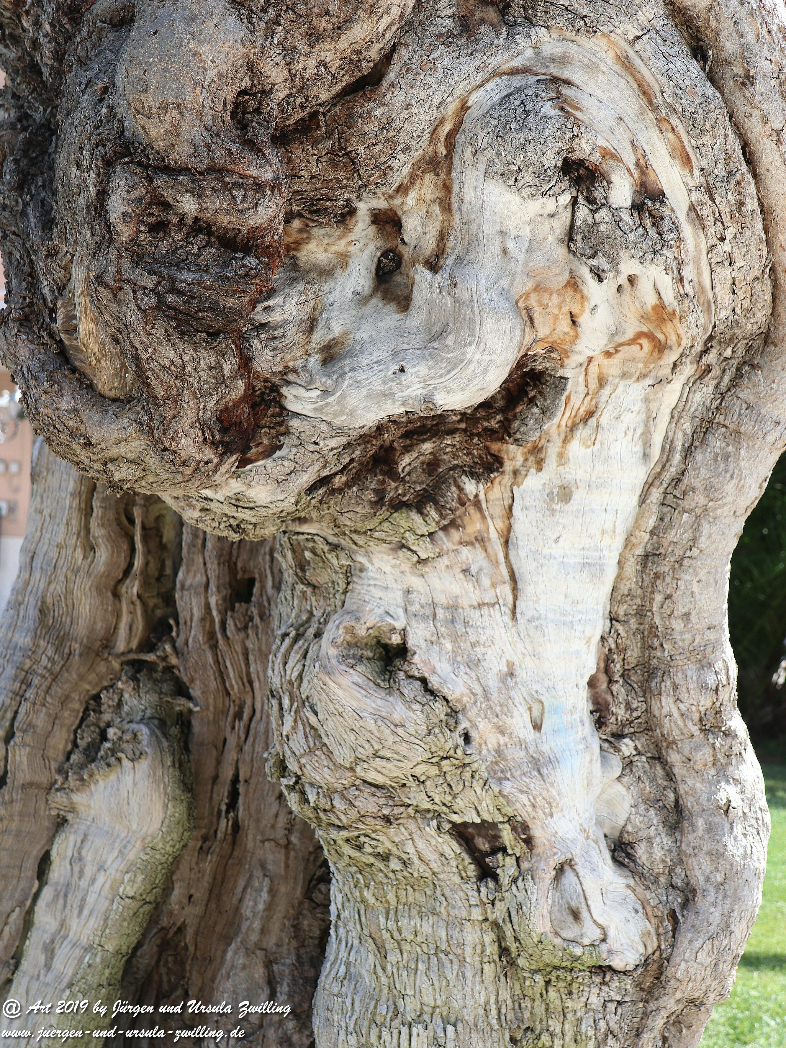 Olivenbaum - Kunst 4