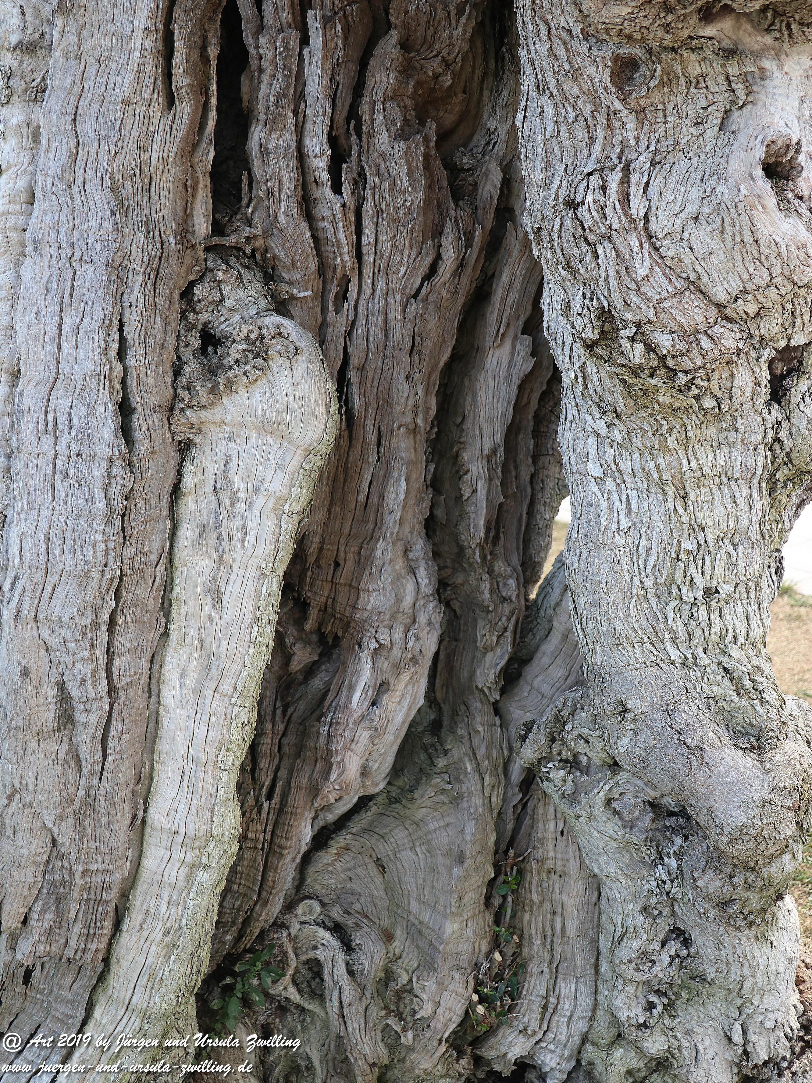 Olivenbaum - Kunst 5
