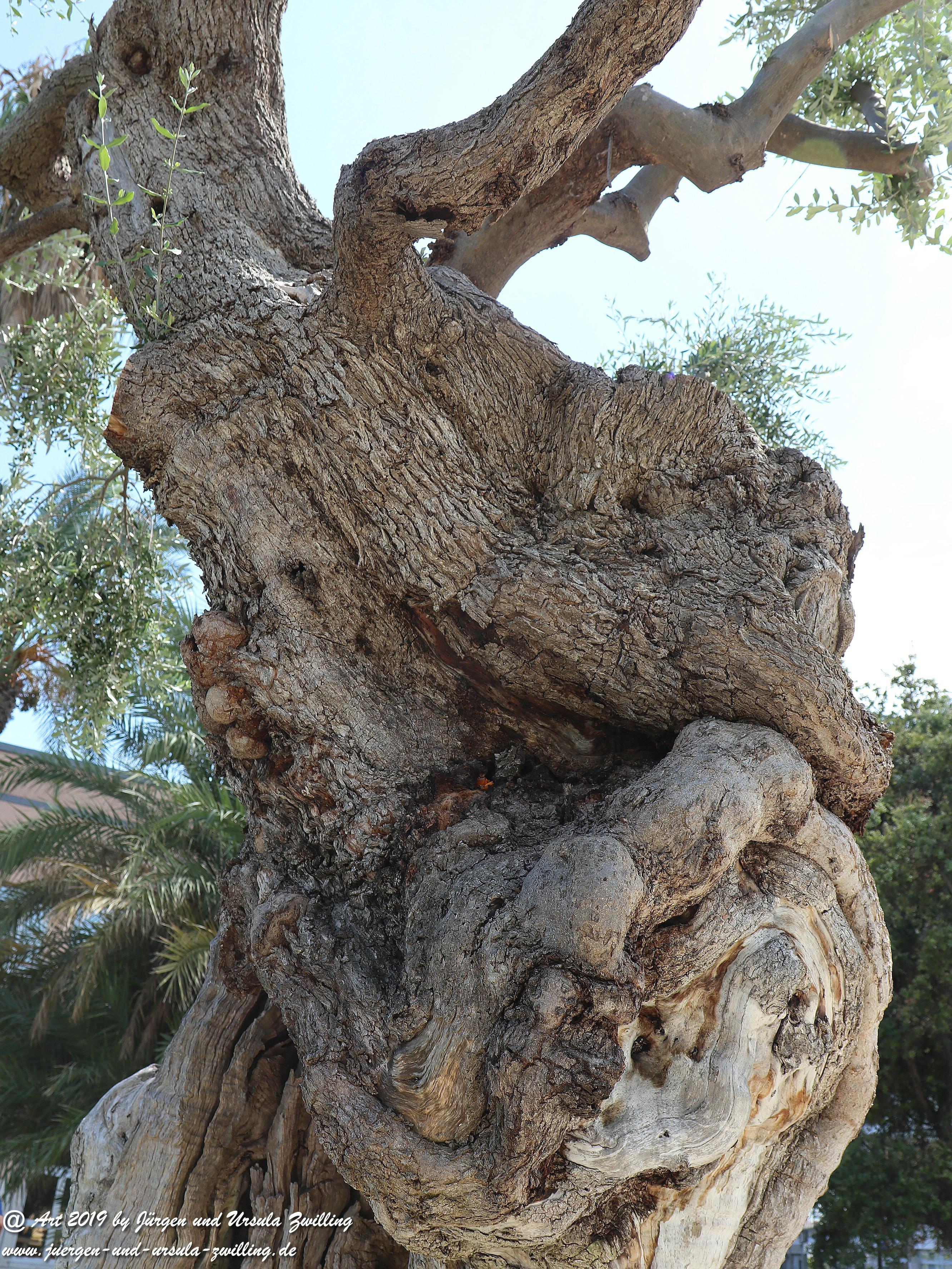 Olivenbaum - Kunst 6