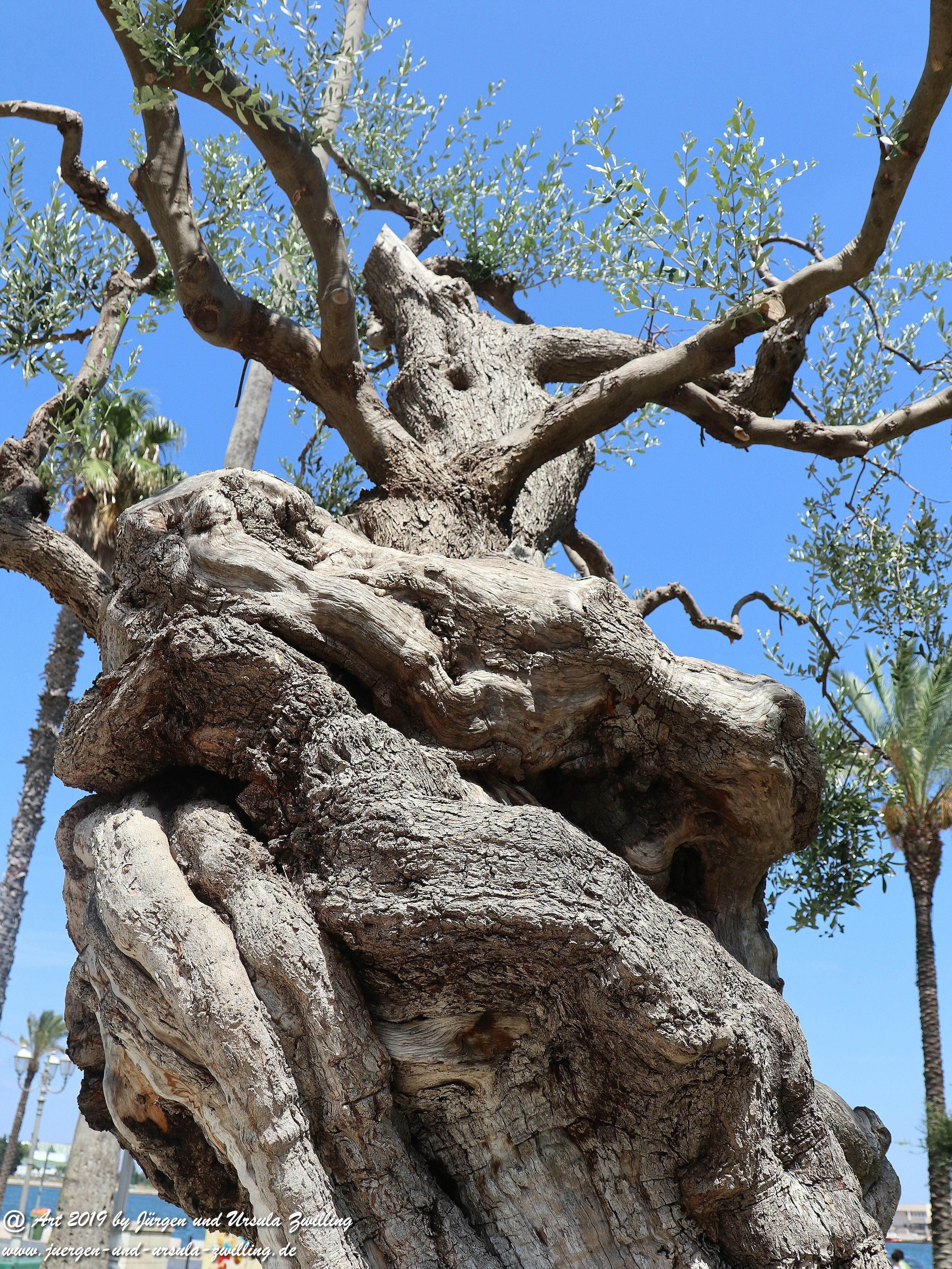 Olivenbaum - Kunst 7