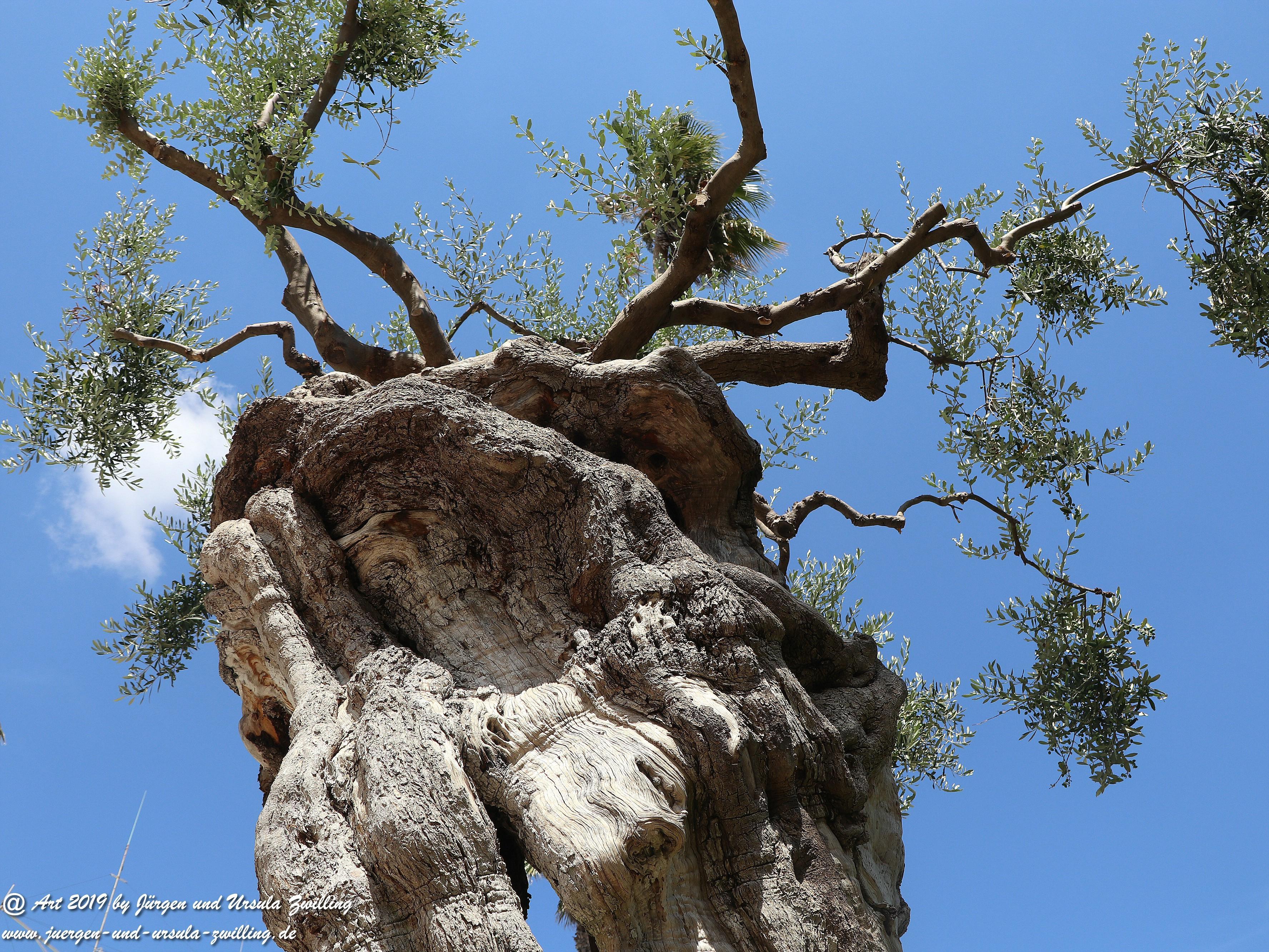 Olivenbaum - Kunst 8