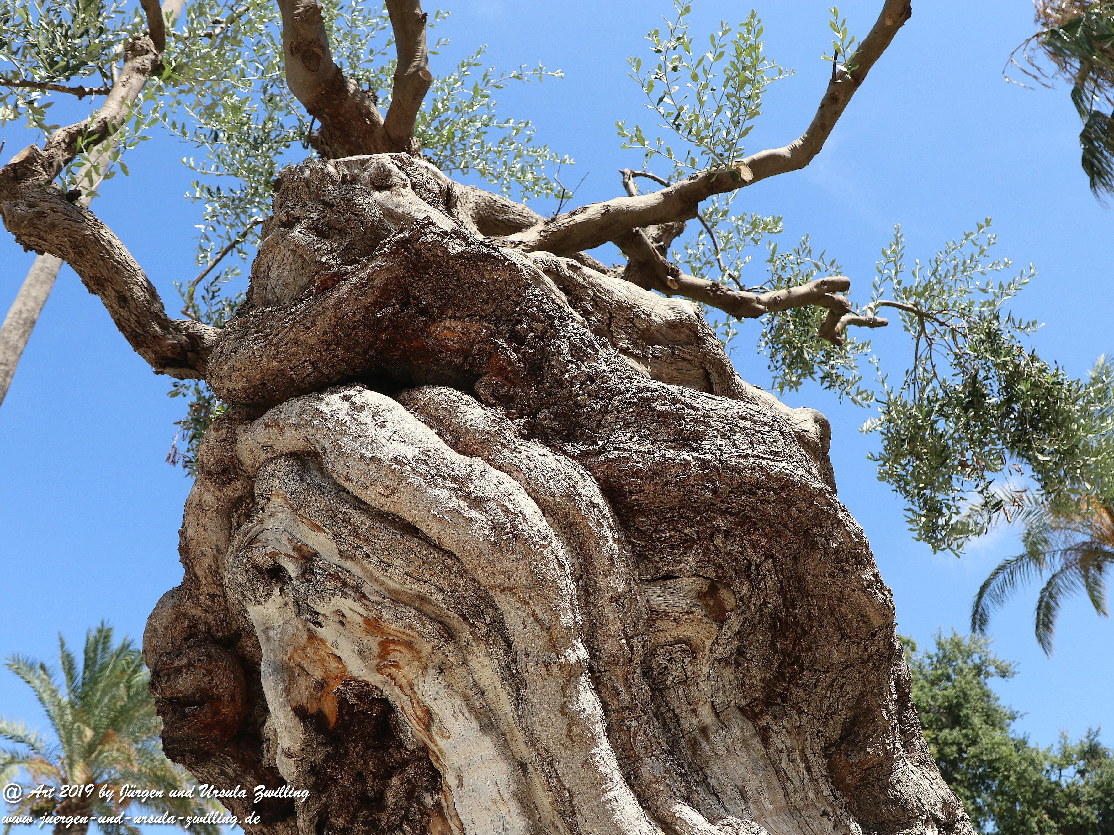Olivenbaum - Kunst 9