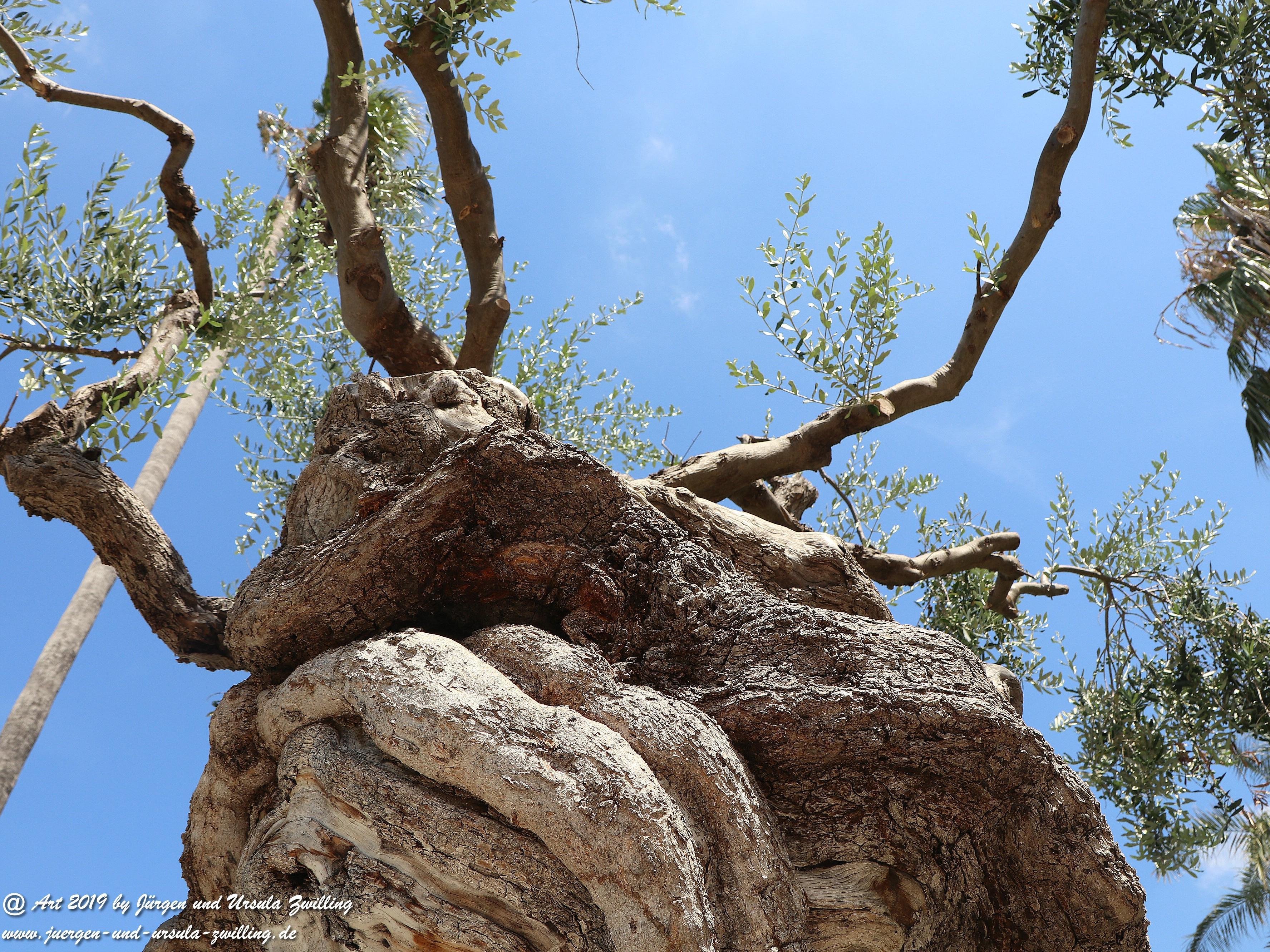Olivenbaum - Kunst 10
