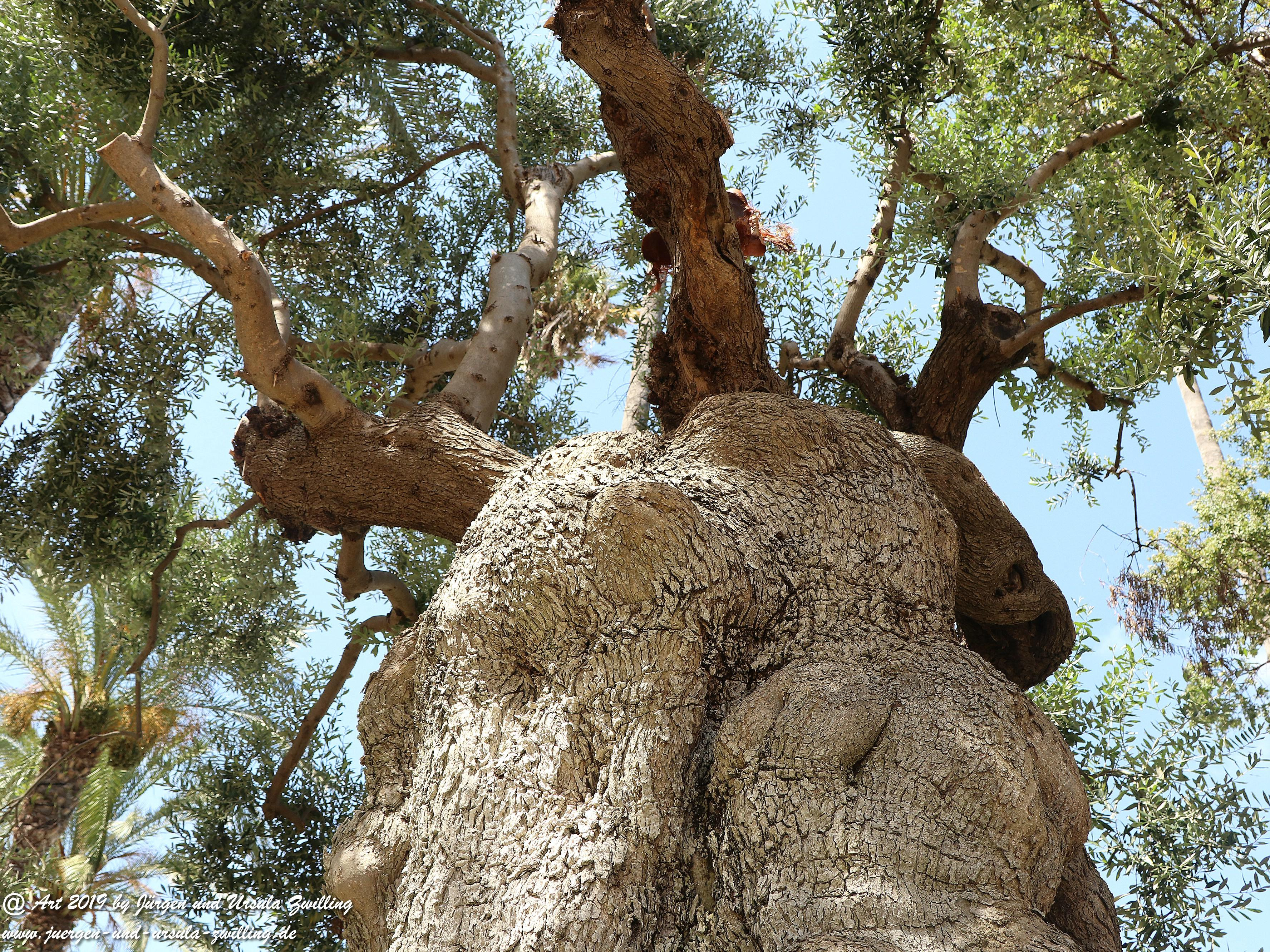 Olivenbaum - Kunst 12