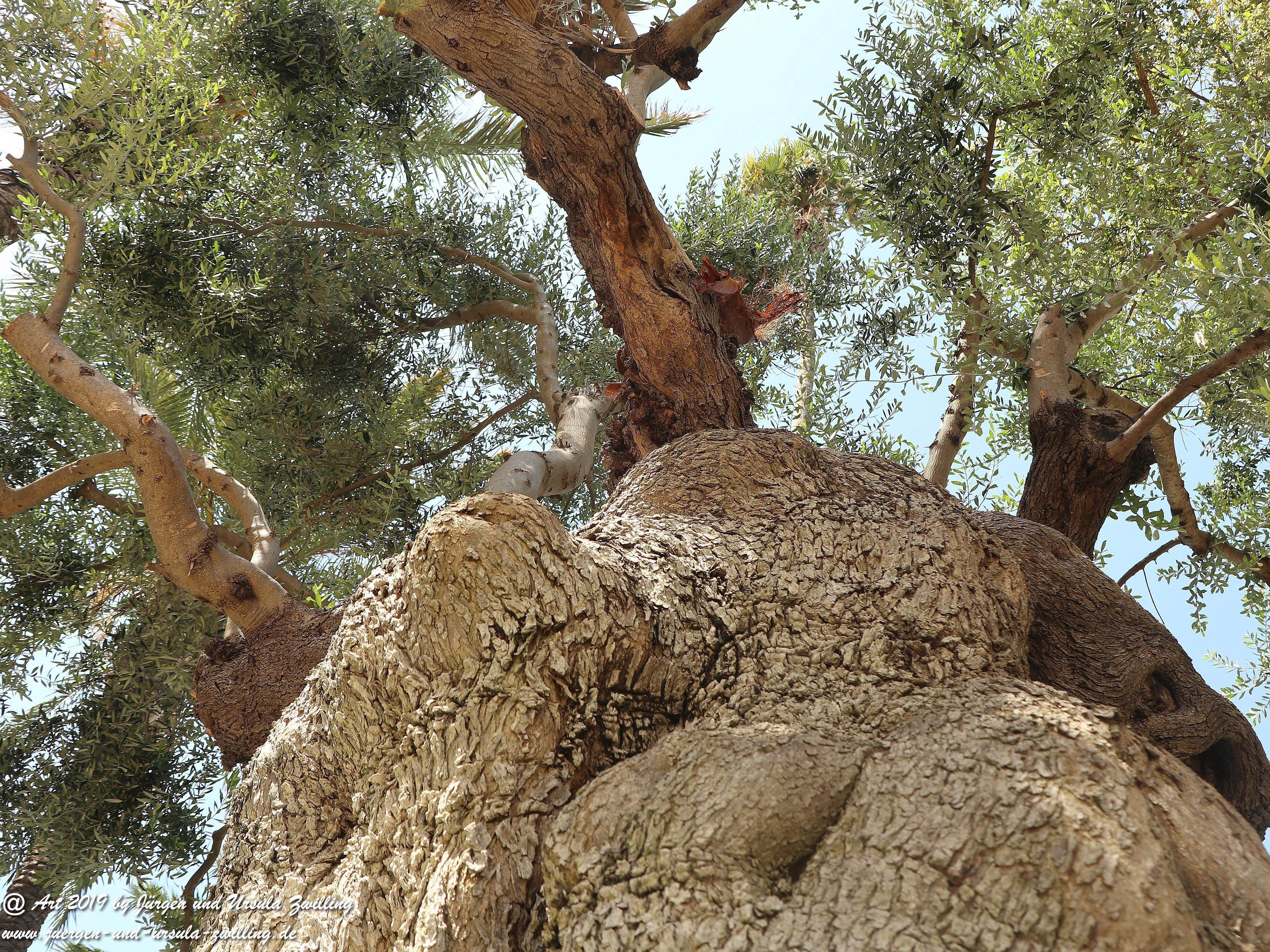 Olivenbaum - Kunst 13