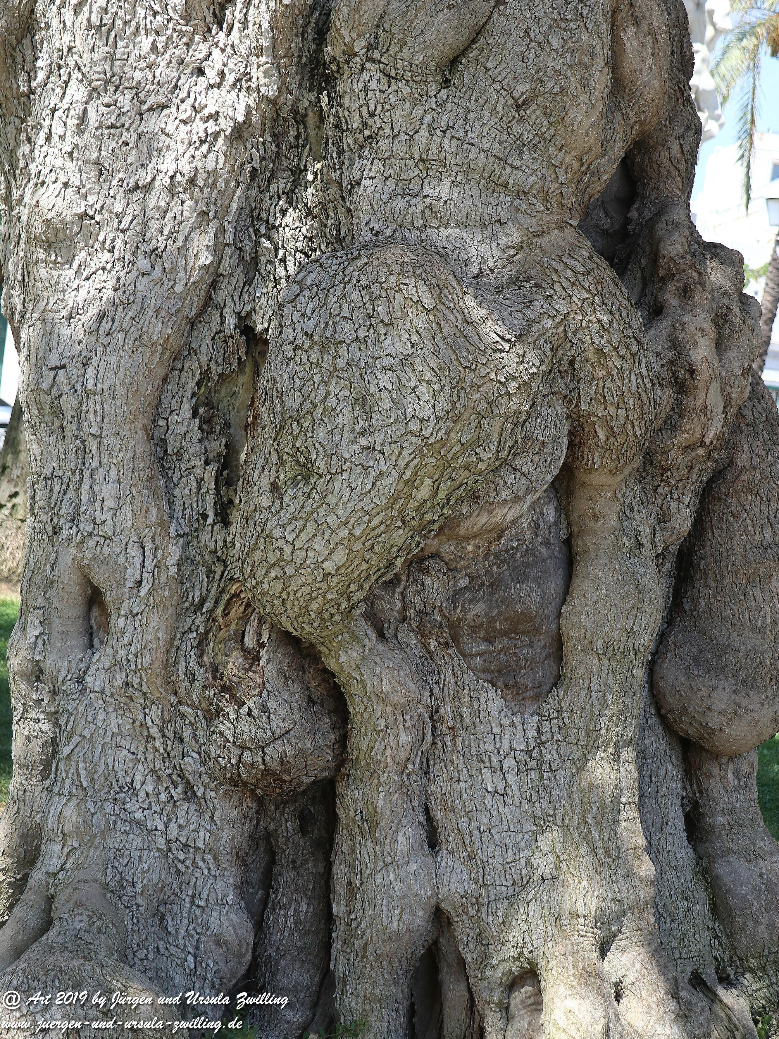 Olivenbaum - Kunst 14