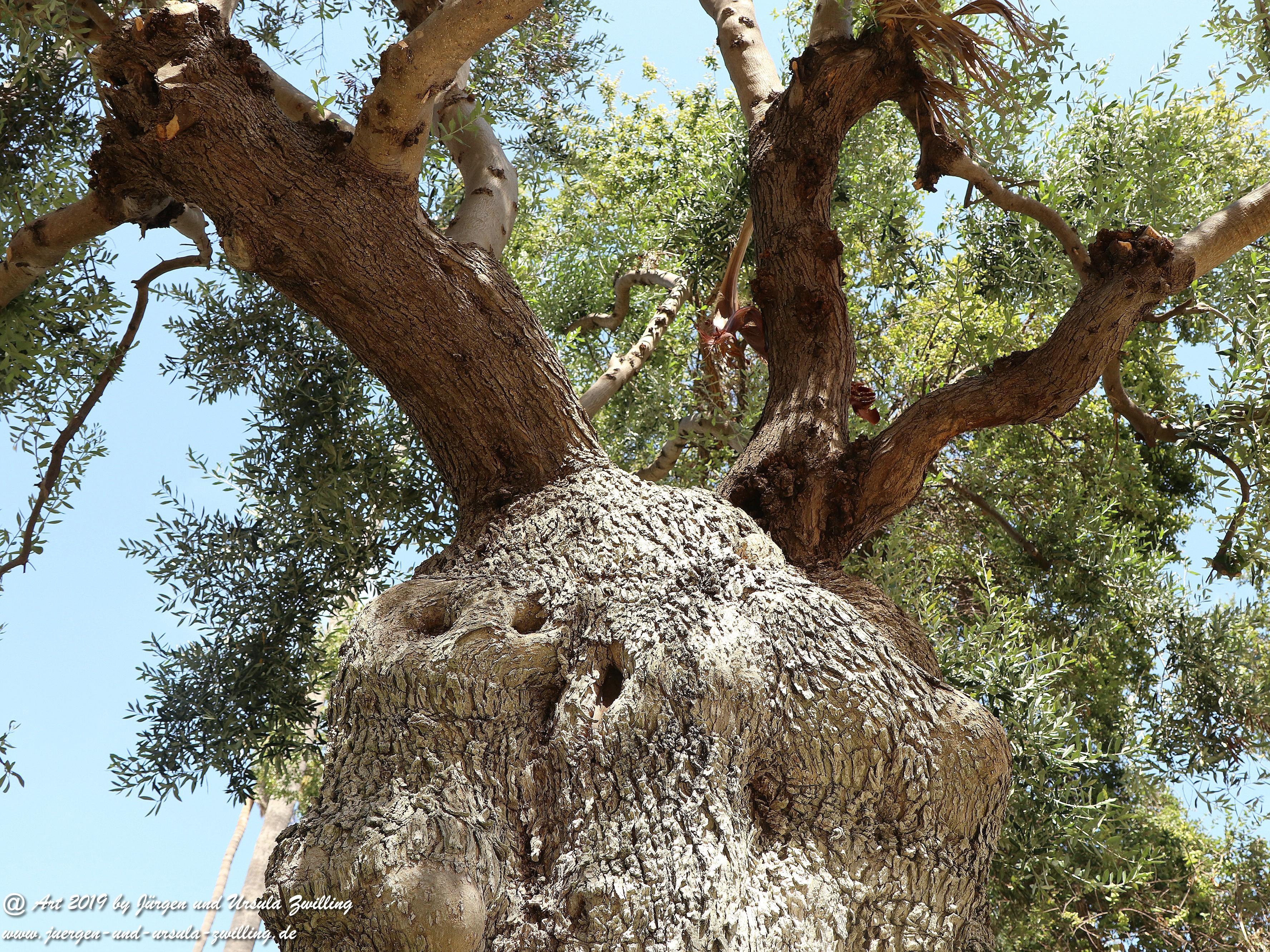 Olivenbaum - Kunst 15