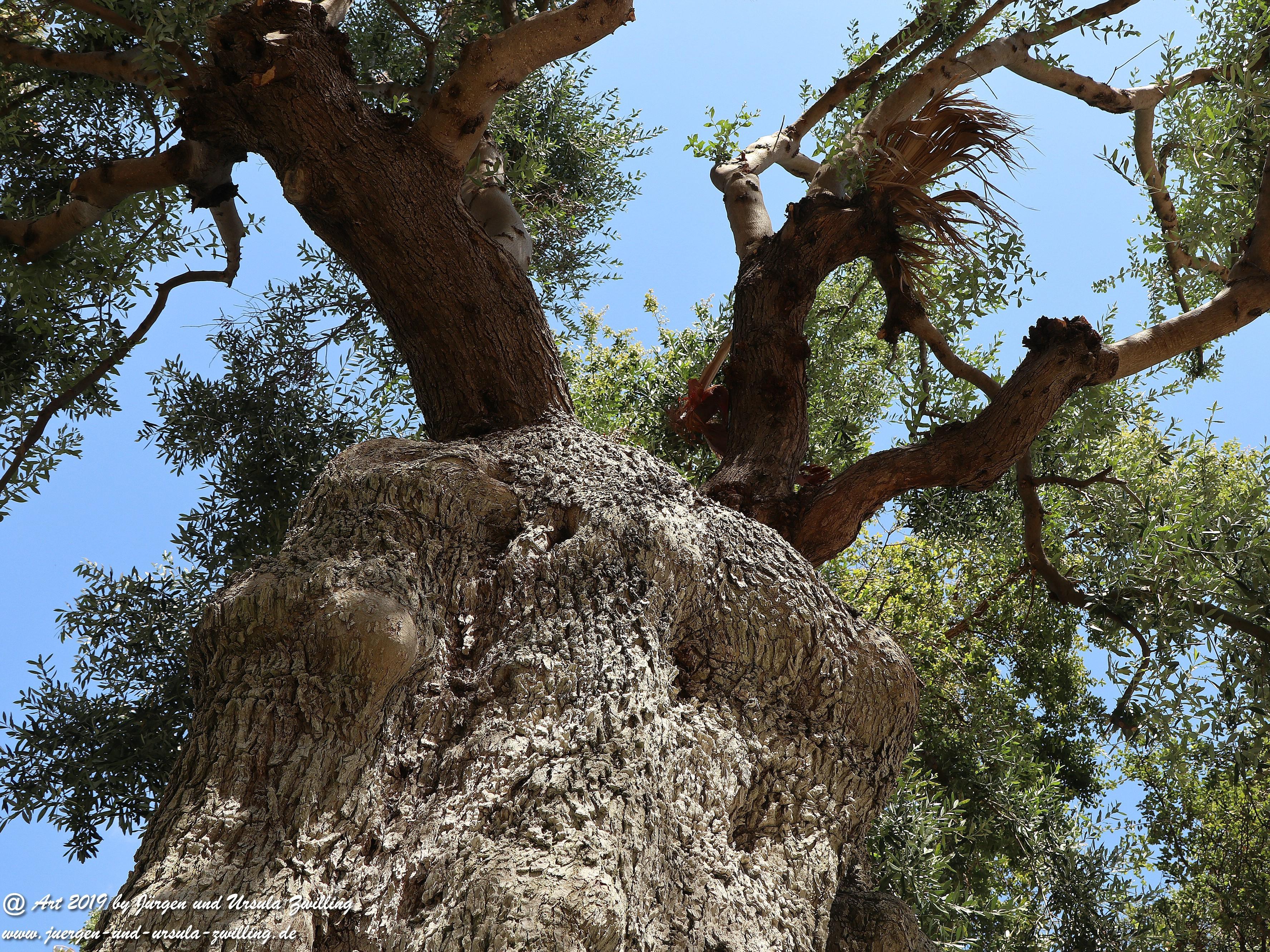 Olivenbaum - Kunst 16