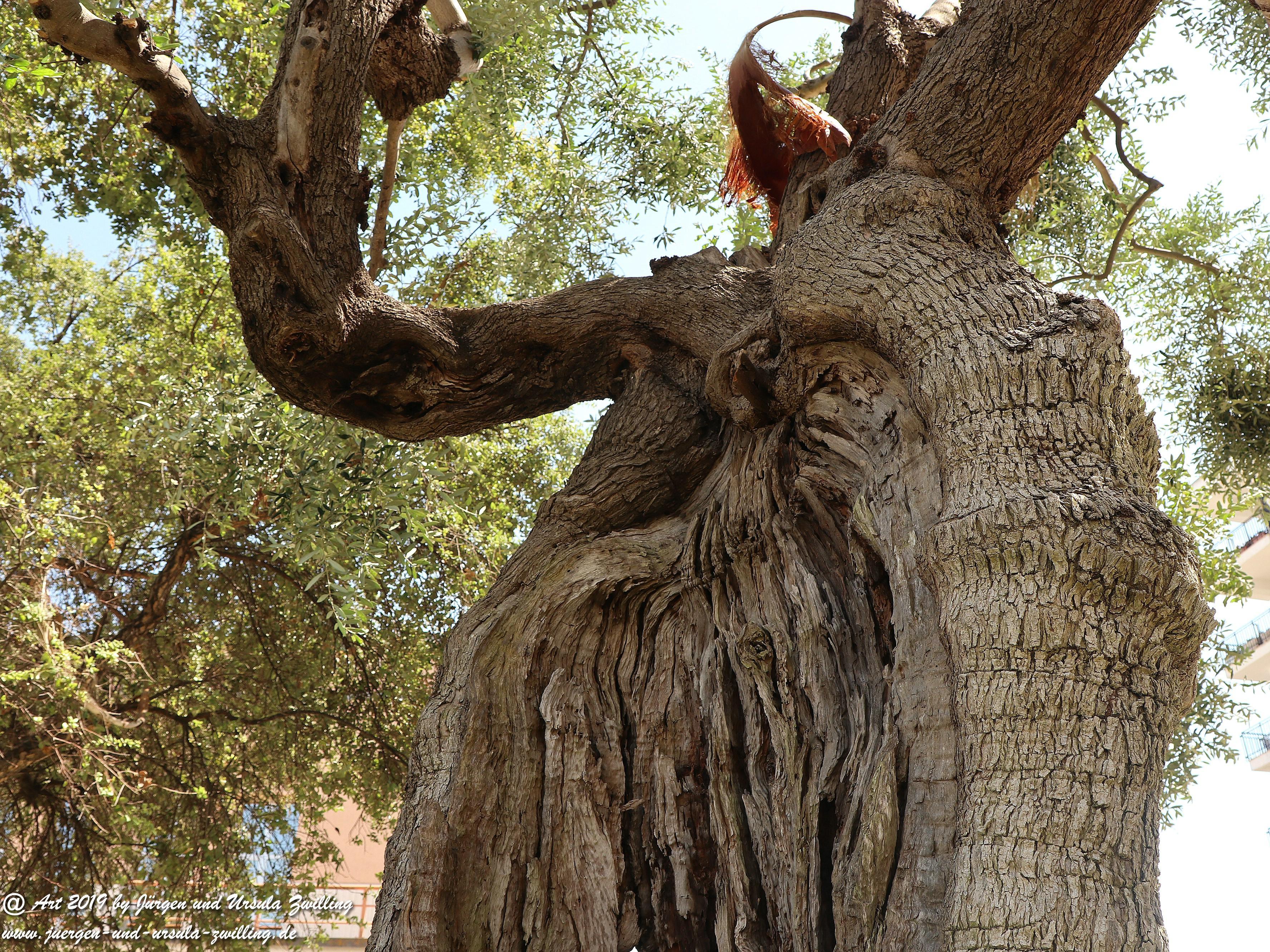 Olivenbaum - Kunst 17