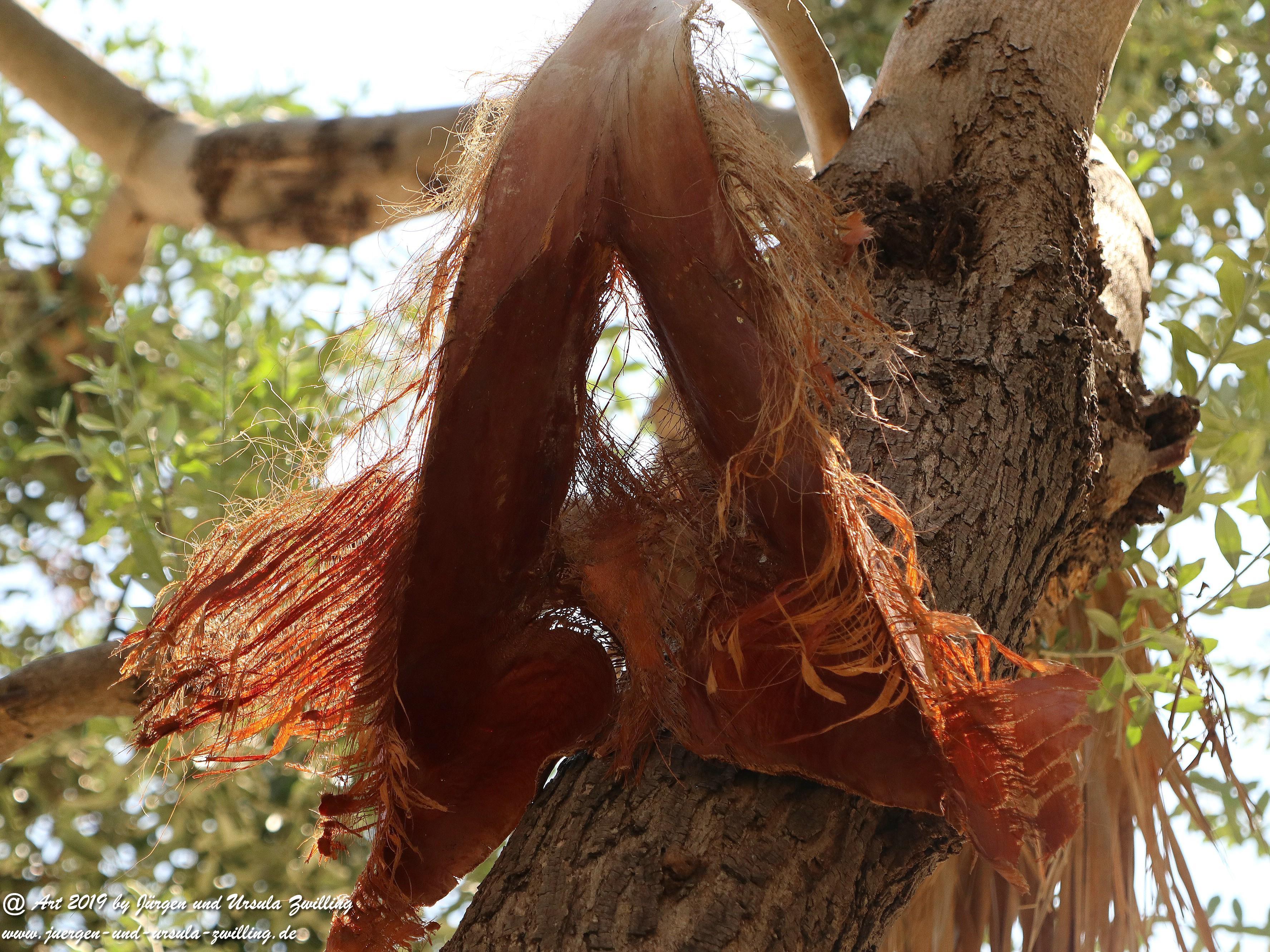 Olivenbaum - Kunst 19