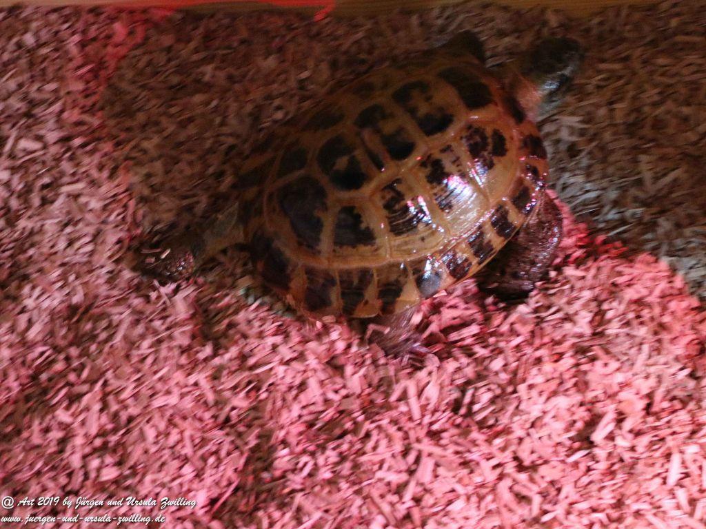 Schildkröten Umzug ins Winterquartier