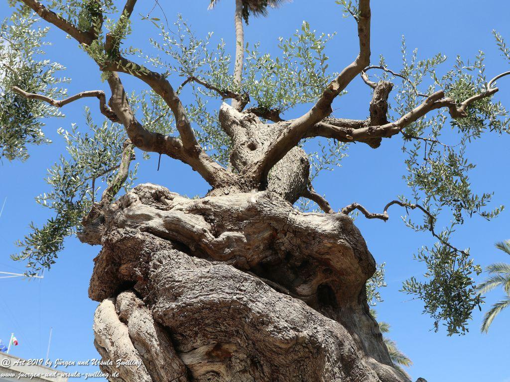 Olivenbaum - Kunst in Brindisi in Apulien - Italien