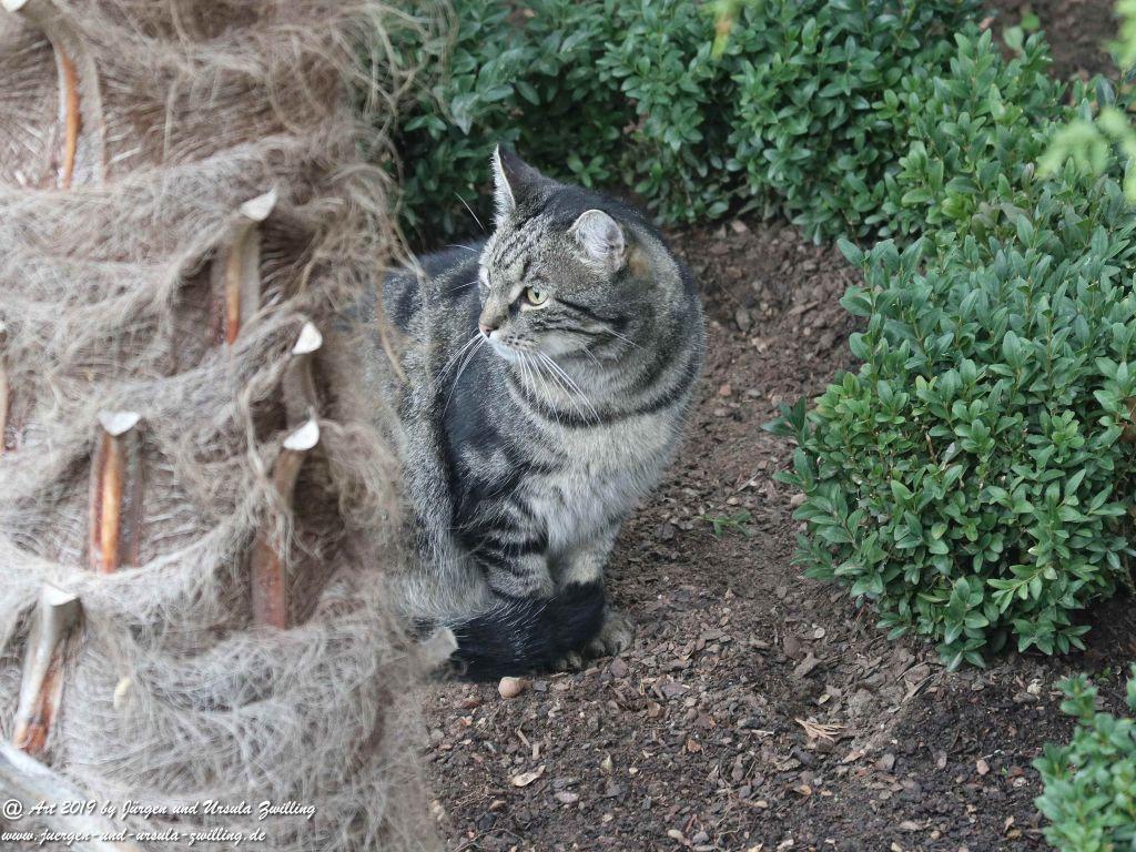 Katze Mimi im Oktober 2019 #drrodolfo #katzemimi