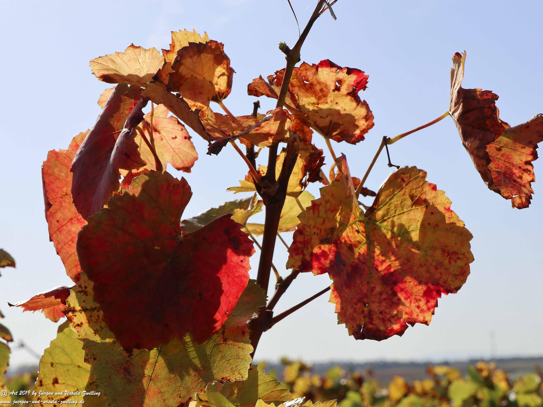 Herbst in Nierstein 11