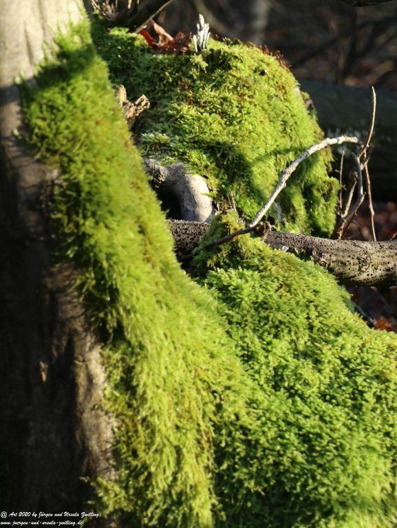 Felder Mainz Finthen und Ober Olmer Wald an Neujahr