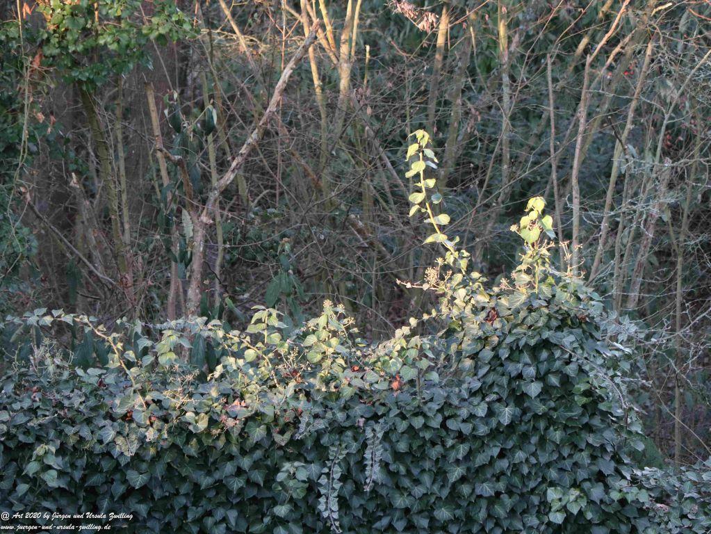 Januar - Morgen - Sonne im Garten