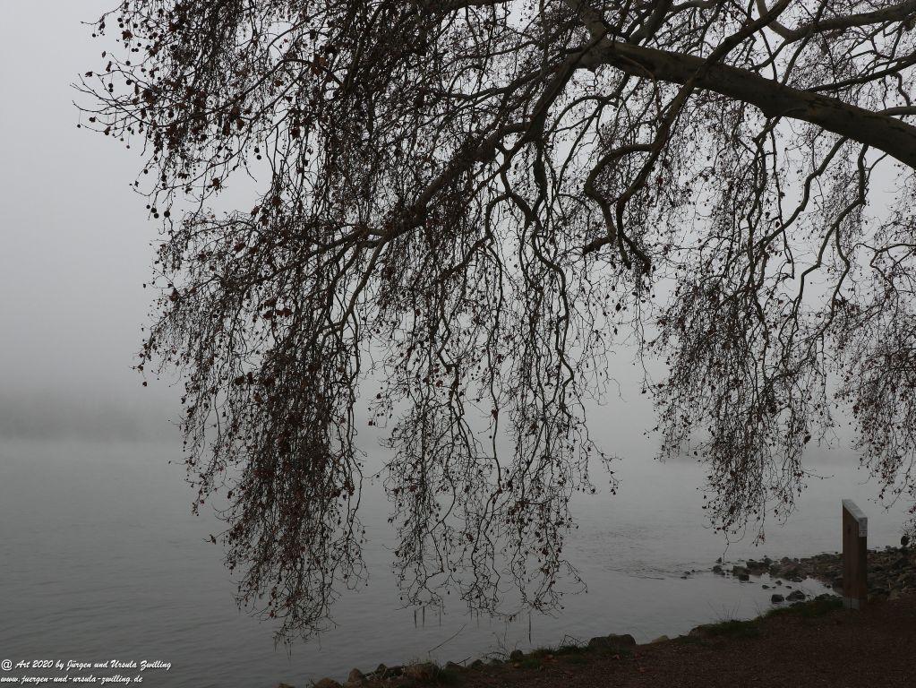 Philosophische Bildwanderung im  Nebel von Eltville am Rhein nach Hattenheim zurück nach Eltville