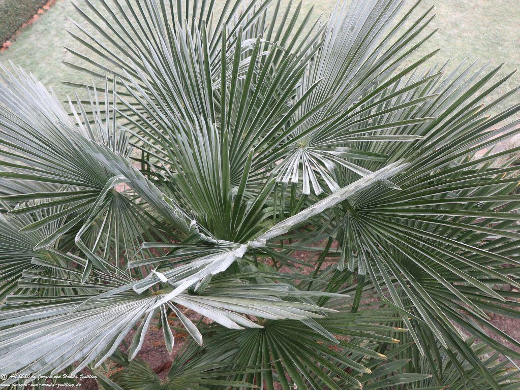 Frostgarten