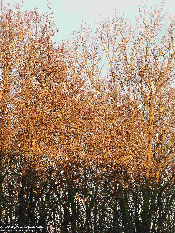 Januar - Morgen - Sonne 3