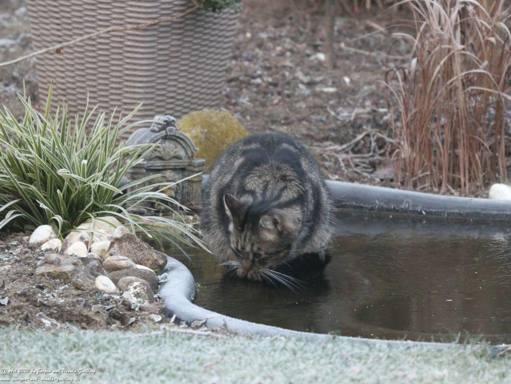 Katze Mimi auf dem Eis