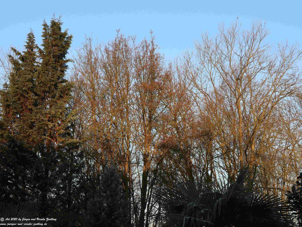 Februar  - Garten - Morgenblick