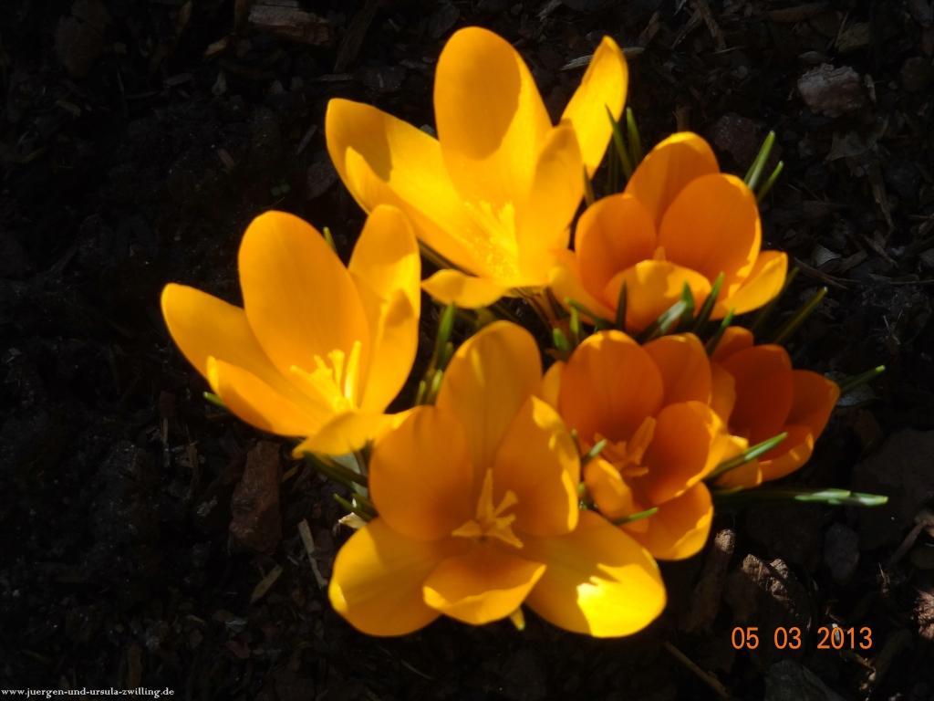 Erstes Frühlingserwachen im Garten