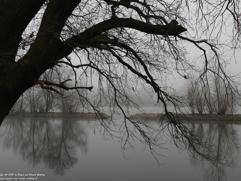 Rhein- Januar - Spiegelung 2