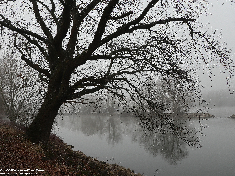 Rhein- Januar - Spiegelung 5