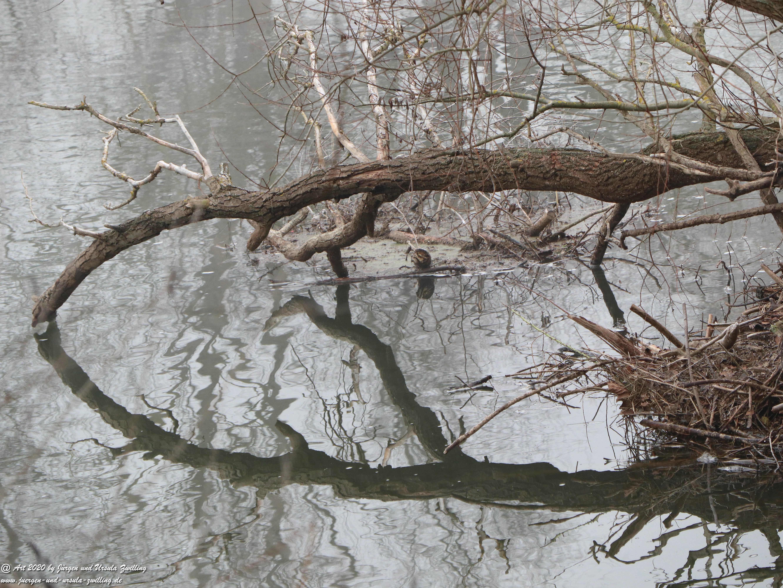 Rhein- Januar - Spiegelung 7