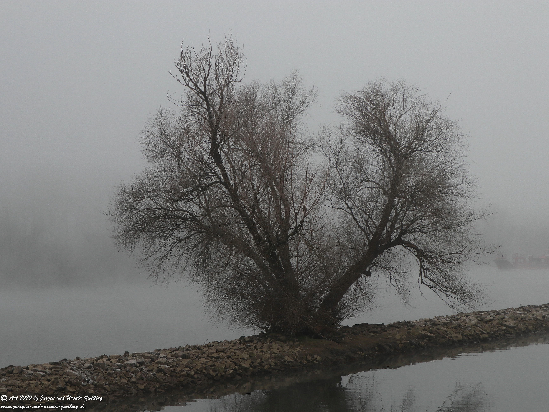 Rhein- Januar - Spiegelung 10
