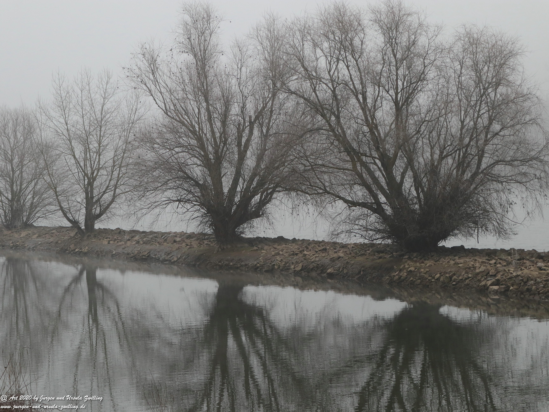 Rhein- Januar - Spiegelung 12
