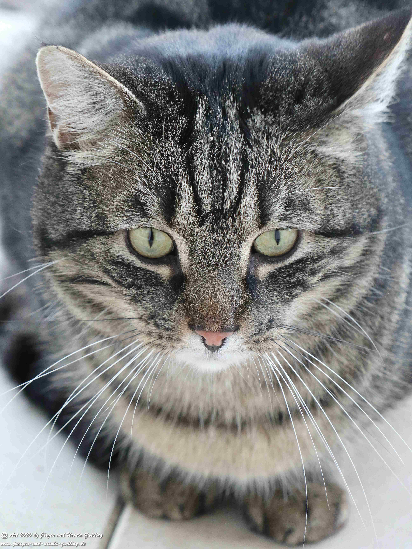 Katze Mimi 11
