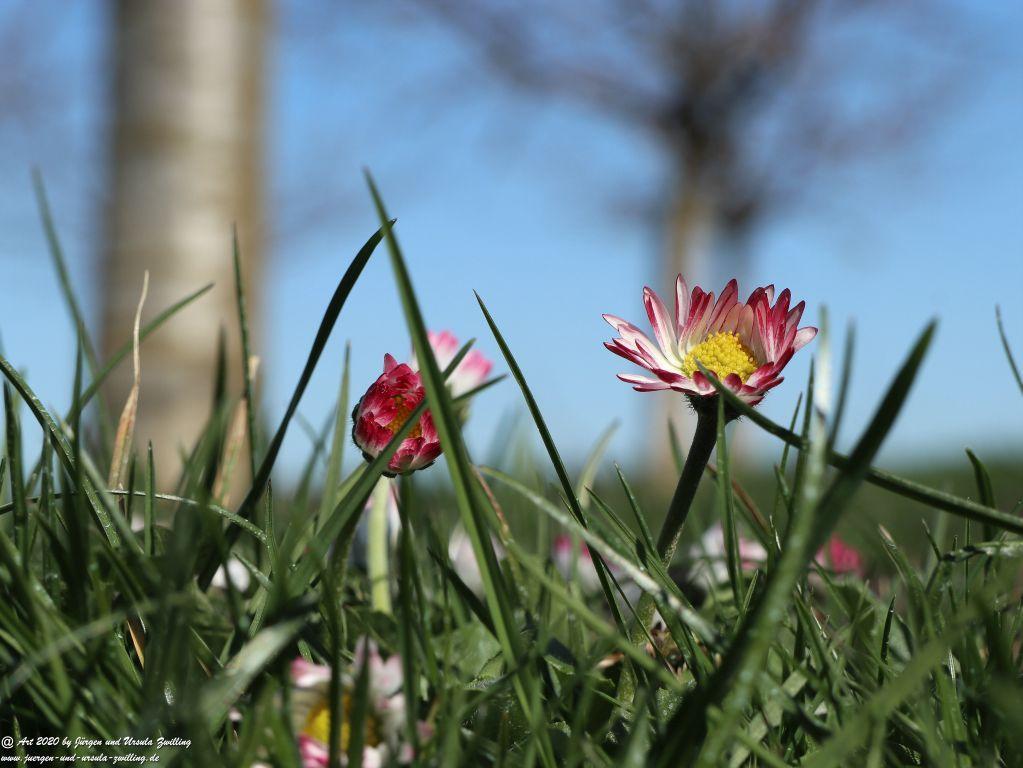 Frühling in Rheinhessen