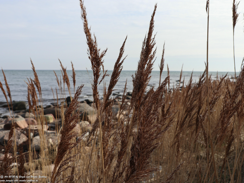 Fehmarn -  Gräser 11