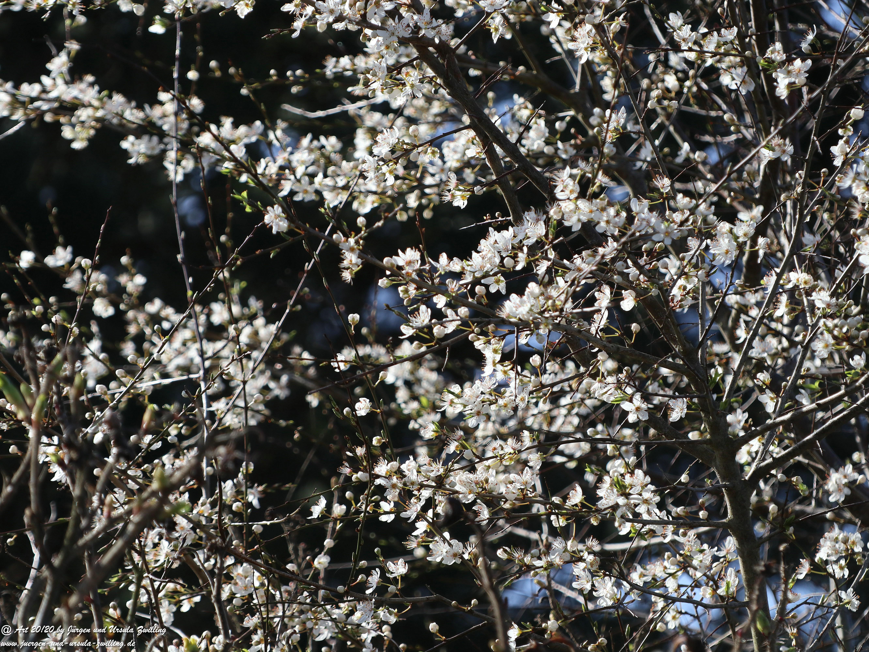 Flügge Frühling 1