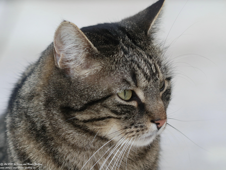Katze Mimi 13