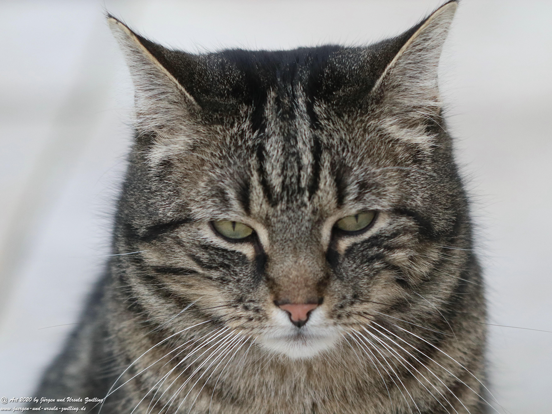 Katze Mimi 14