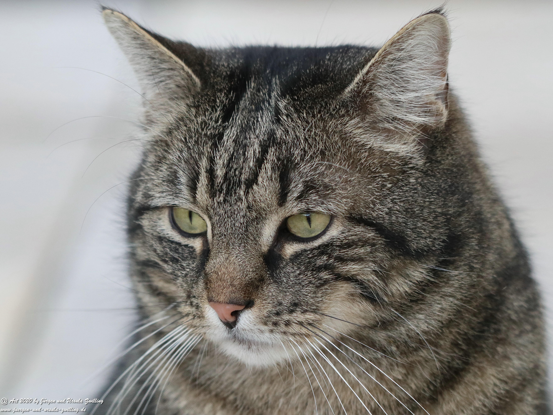 Katze Mimi 15