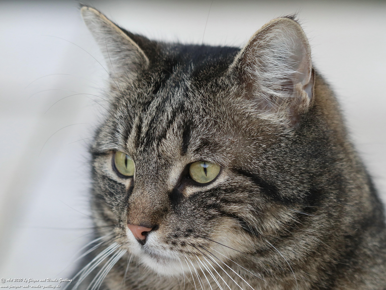 Katze Mimi 18