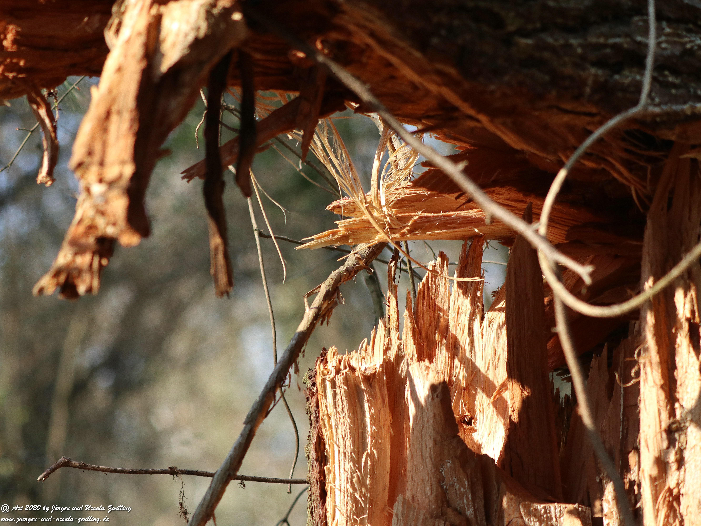 Ober Olmer Waldkunst 3