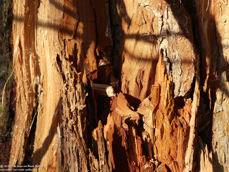 Ober Olmer Waldkunst 10