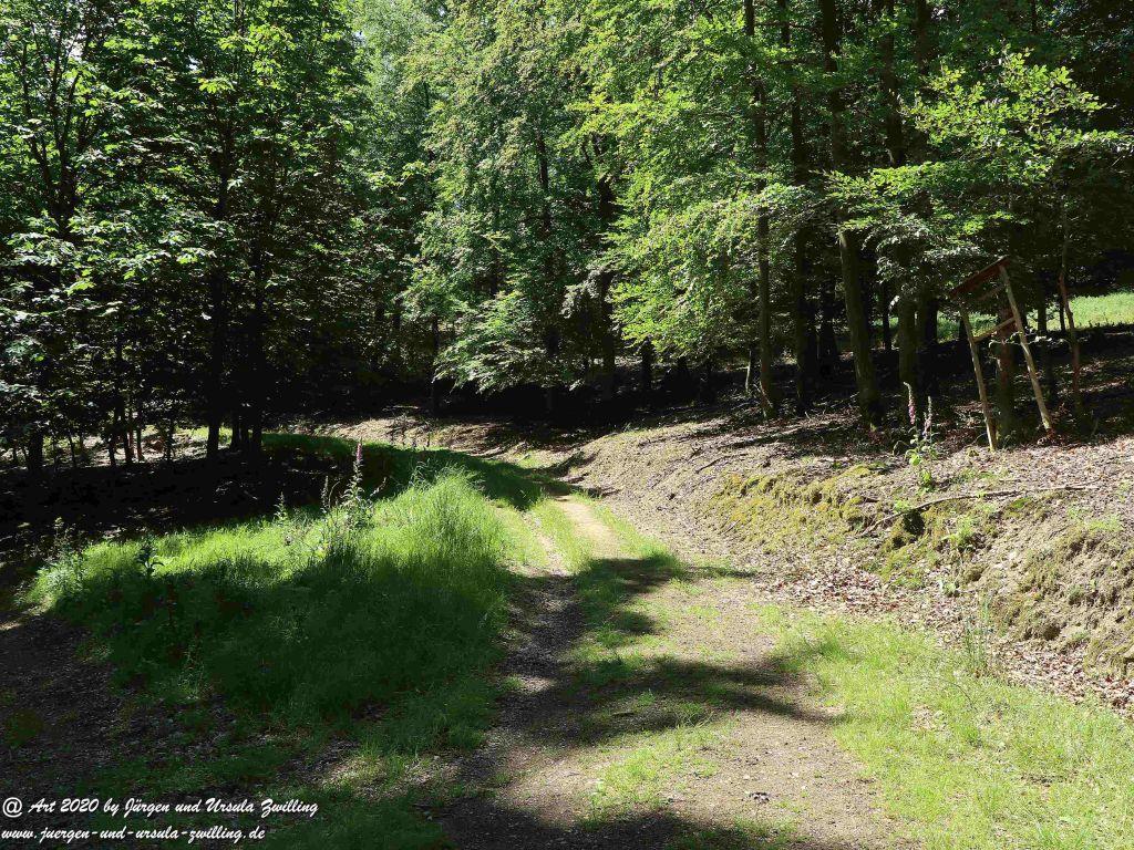 Philosophische Bildwanderung  Dickschieder Wildwechsel - Wisper Trail - Taunus