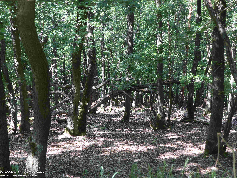 Rhein Wald 4