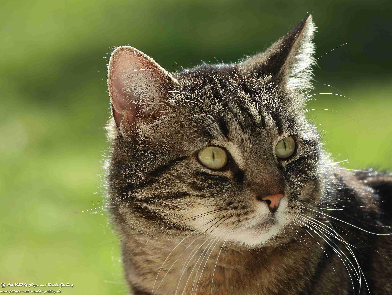 Katze Mimi  23