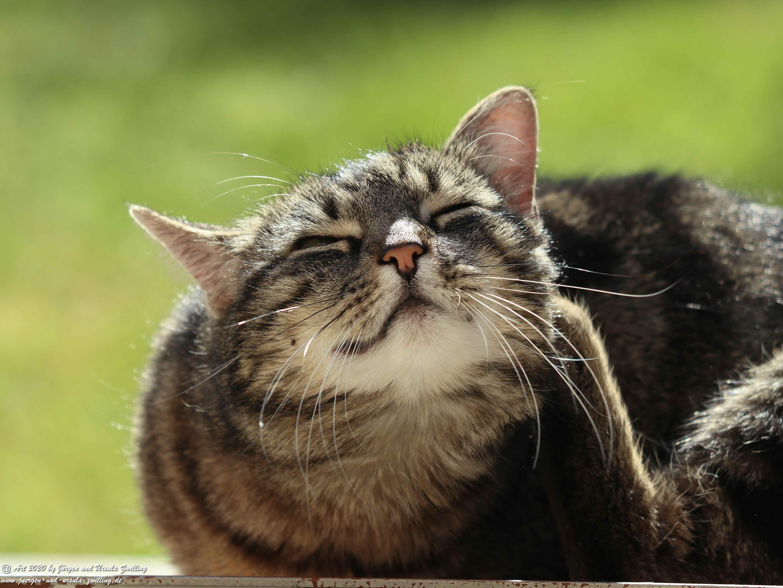 Katze Mimi 26